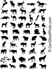 colour., illustration, silhouettes, vecteur, noir, animal