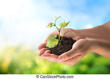 concept, agriculture, peu, plante