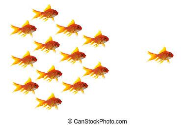 concept, business, diffrent, fond, poisson rouge, blanc, unique, éditorial