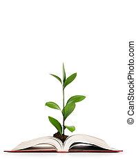 concept, connaissance, feuilles, -, livre, croissant, dehors