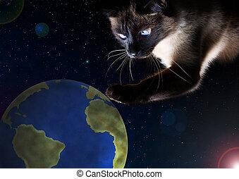 concept, danger, chat, terre planète, chasses, earth.