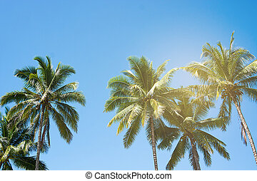 concept., fond, arbres, beau, paume, noix coco, été, exotique