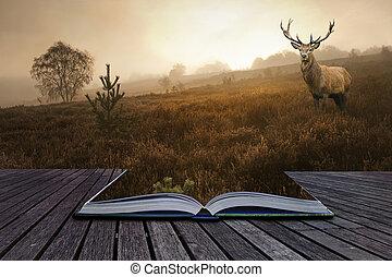 concept, image, cerf, créatif, cerf, livre, rouges, venir, brumeux, pages, paysage, dehors
