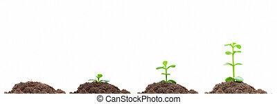 concept, processus, soil., isolated., croissance, vert, plan, croissant