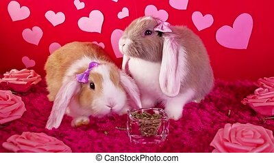 concept, 's, lapin, chouchou, valentines, valentin, animal, jour