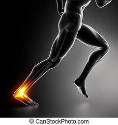 concept, sports, cheville, achille, blessure, talon