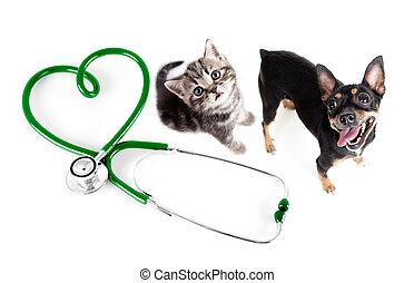 concept, vétérinaire, chats, autre, animaux familiers, chiens