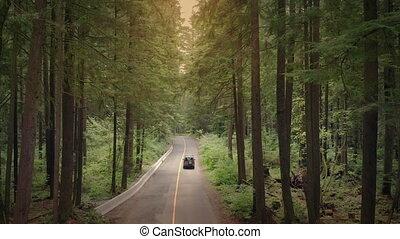 conduite, voiture, voler, bois, par, au-dessus, coucher soleil