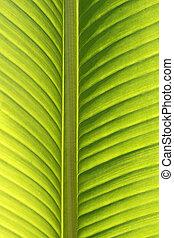congé, arbre, paume, détail, rétroéclairage