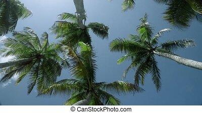 congé, rotation, mouvement, regarder, paume haut, rustle, arbres, vent