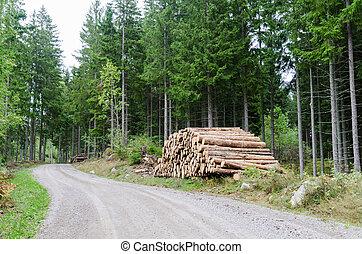 conifère, bord route, forêt, tas bois