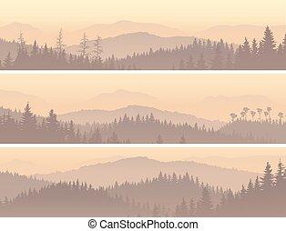 conifère, fog., bois, matin