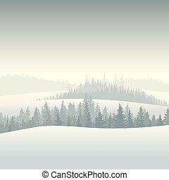 conifère, forêt, morning.
