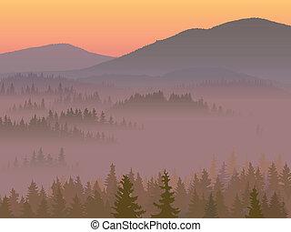 conifère, vallée, wood.