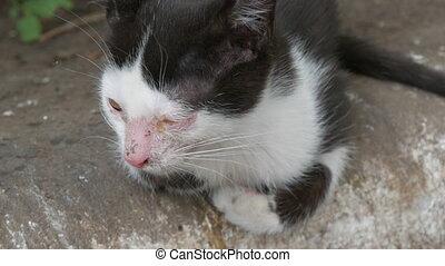 conjonctivite, chaton, noir, rue, enflé, blanc, sdf, assied, yeux, malade