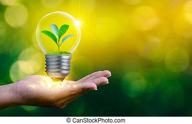 conservation, plante, forêt, croissant, chauffage, intérieur, concept, la terre, ambiant, sur, économie, lampe, light., concepts, sec, global, sol, arbres, ampoule