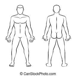 contour, nue, dos, illustration, vue frontale, homme