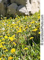 contrôle, mauvaises herbes, dehors
