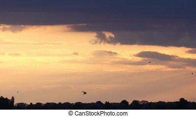 contre, beau, mouche, oiseaux, toile de fond, coucher soleil