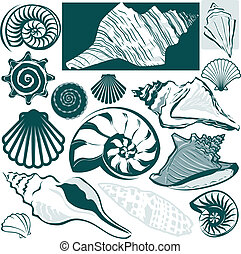 coquille, collection