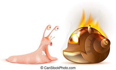 coquille, escargot, conque, brûler, insurance., propriété