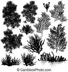 corail, éléments