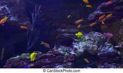 coraux, sous-marin, fish