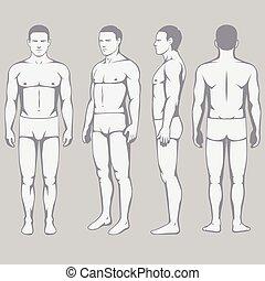 corps, anatomie, dos, vecteur, devant, côté, homme