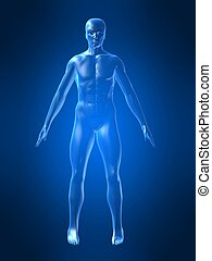 corps, forme, humain