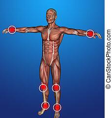 corps, humain, inflammation