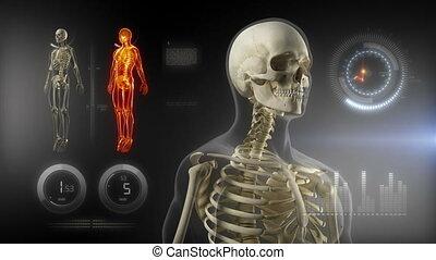 corps, interface, écran, monde médical, humain