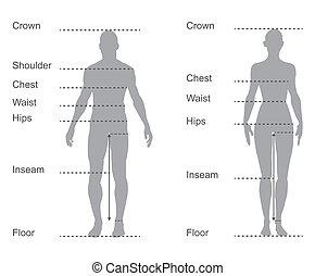 corps, mesures, diagramme, diagramme, femme, mesure, mâle, habillement, taille
