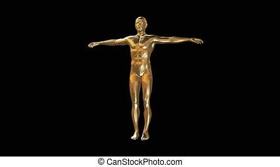 corps, modèle, homme, or, 3d
