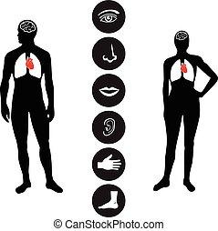 corps, monde médical, partie, humain, icône