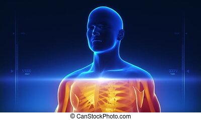 corps, rayon x, balayage, monde médical