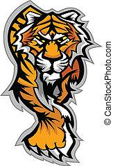corps, tigre, vecteur, mascotte, graphique