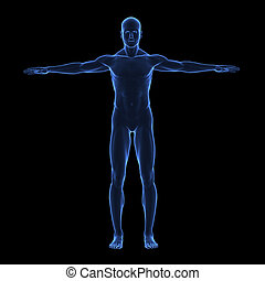 corps, x, humain, rayon