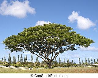 cosse, arbre, singe