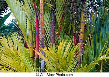 costa, jardin, rica, bambou