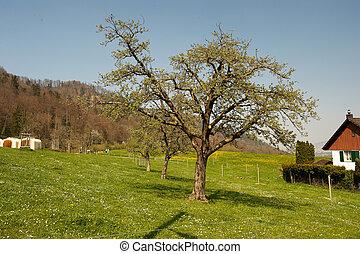 coteau, résidence, arbre, rural