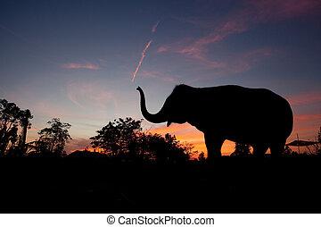 coucher soleil, éléphant asiatique
