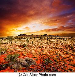 coucher soleil, désert, beauté