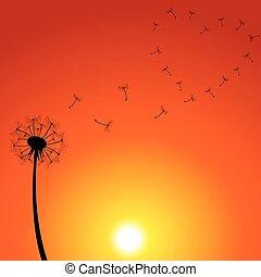 coucher soleil, illustration, pissenlit