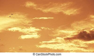 coucher soleil, lot, hirondelles, flying., fond