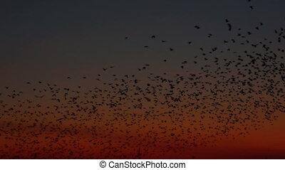 coucher soleil, oiseaux, lot