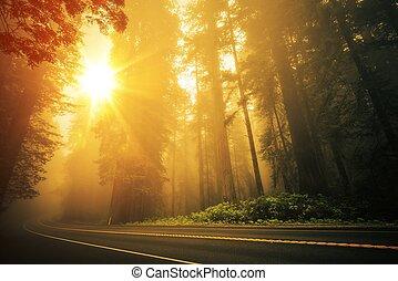 coucher soleil, séquoia, brumeux