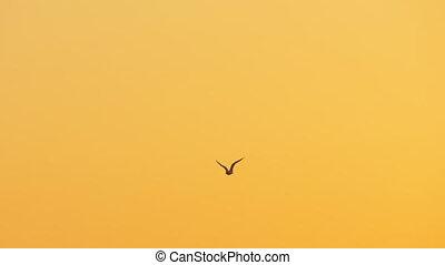 coucher soleil, seagull vole, ciel, contre
