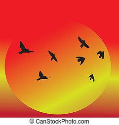 coucher soleil, vue, oiseaux volant, &