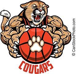 cougouars, basket-ball