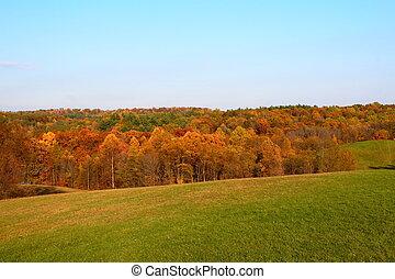 couleur, 2, collines, vivant